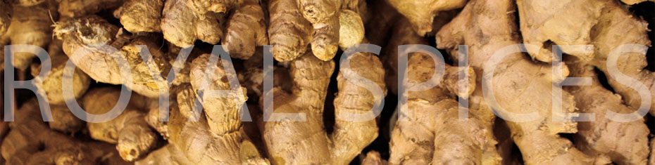 Grade A Whole Dry Ginger Root